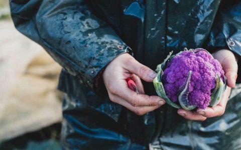 16种营养丰富,美味可口的紫色食物